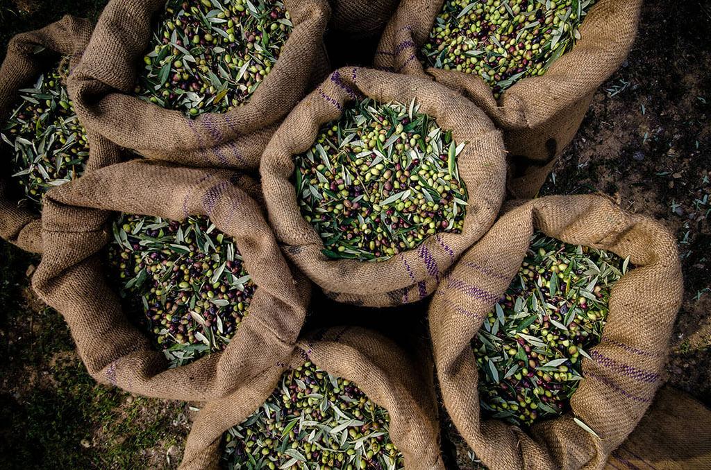 Das frische Olivenöl aus der Ernte 2018 ist da !