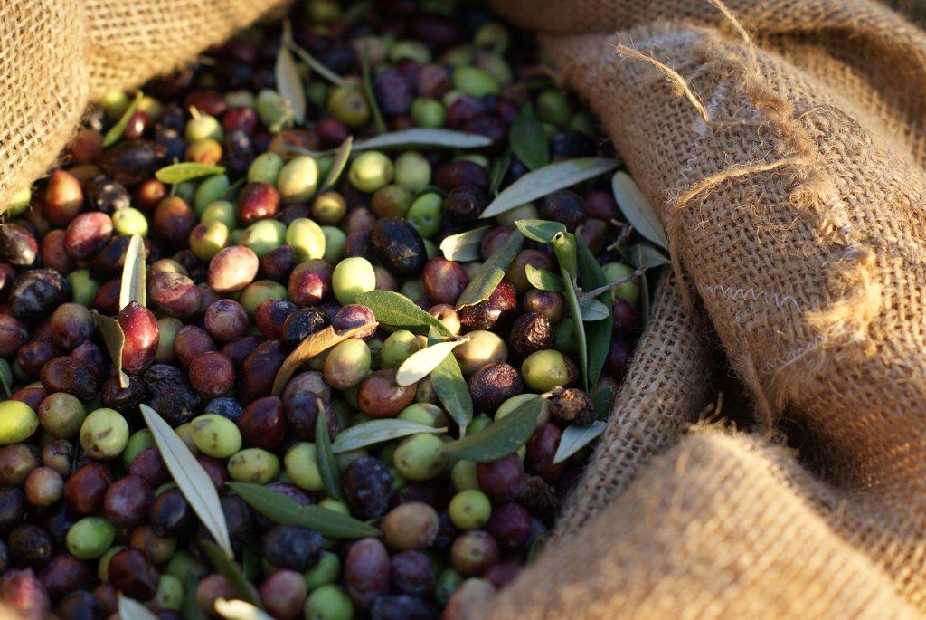 Denzels Oliven